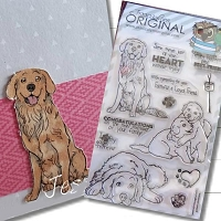 Golden Retriever Sentiments AKC Dog Puppy